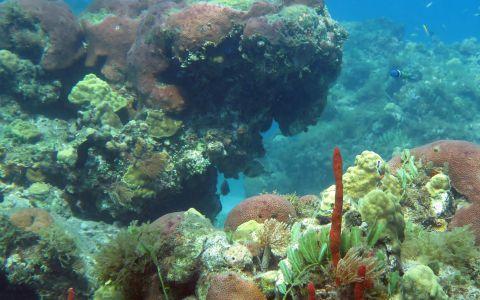 Grande Anse d'Arlet © Yan Buske, Association Flabellina