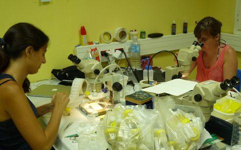L'équipe barcoding en plein travail © Alice Leblond / MNHN / Madibenthos
