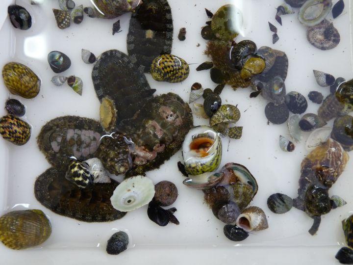 Mollusques © Clarisse Rondier