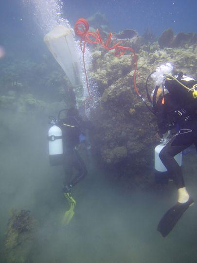 Collecte dans la couche supérieure sédimentaire © Noémie Michez  / MNHN / Madibenthos